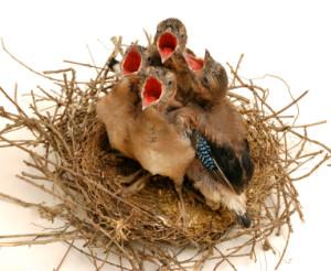 vogels_op_nest